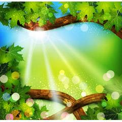龍神のような木と輝く光